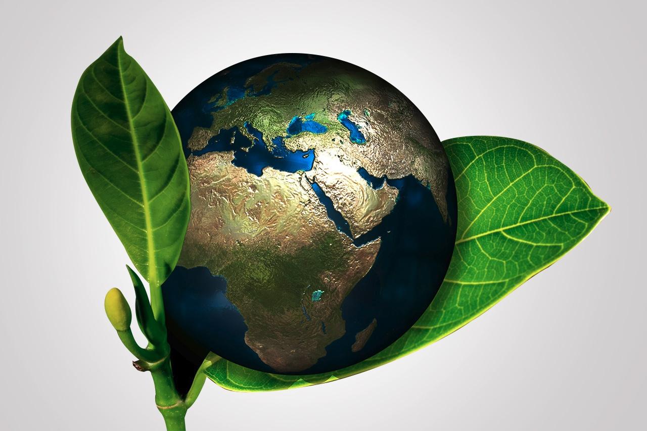 Sustentabilidade nas escolas: a importância do exemplo para a formação de cidadãos conscientes
